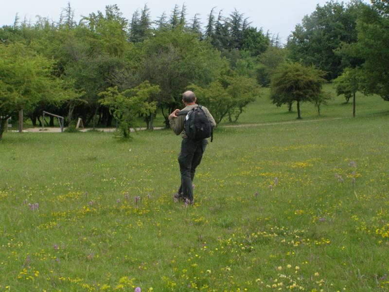 La chasse aux orchidées est ouverte dans la Drôme! Claudseul