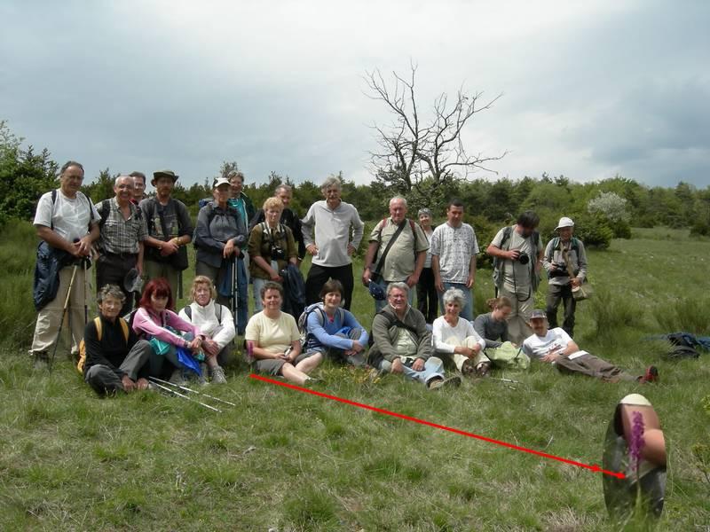 La chasse aux orchidées est ouverte dans la Drôme! Fin