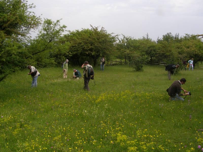 La chasse aux orchidées est ouverte dans la Drôme! Rech1