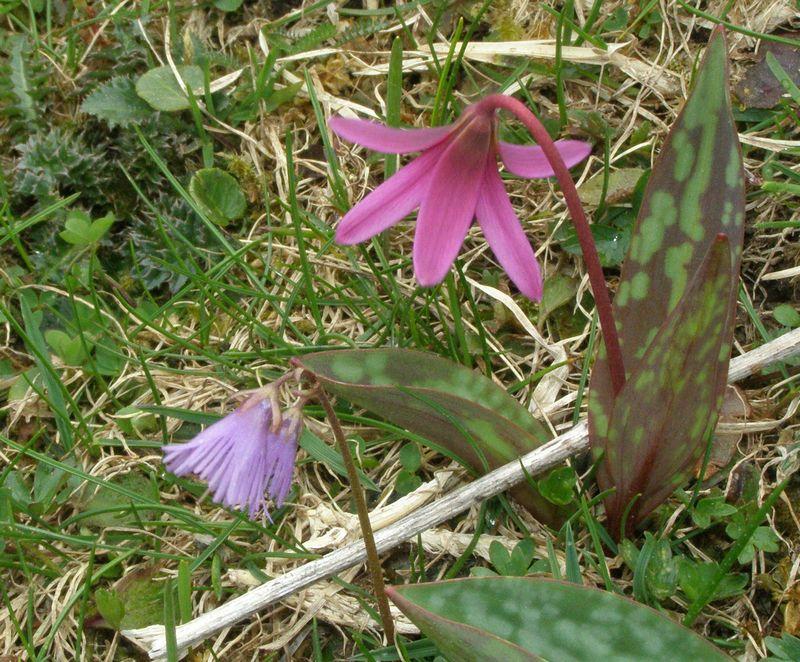 La chasse aux orchidées est ouverte dans la Drôme! Final