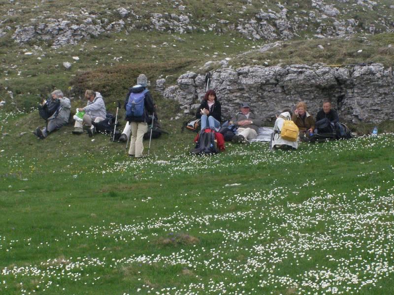 La chasse aux orchidées est ouverte dans la Drôme! Group