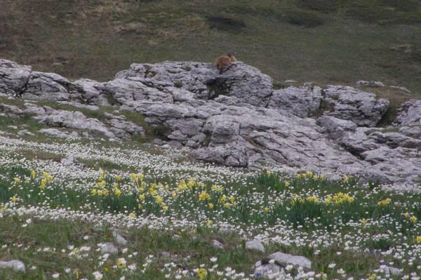 La chasse aux orchidées est ouverte dans la Drôme! Marm
