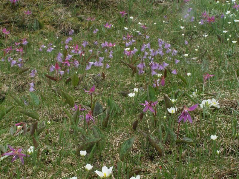 La chasse aux orchidées est ouverte dans la Drôme! Sold